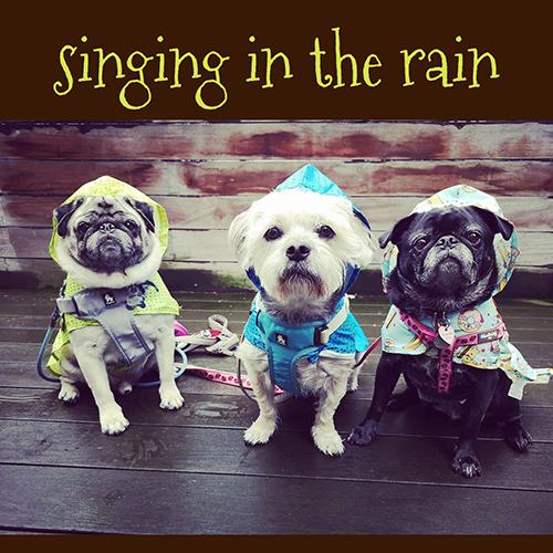 Rain-Coats-from-Dashing-Dawgs